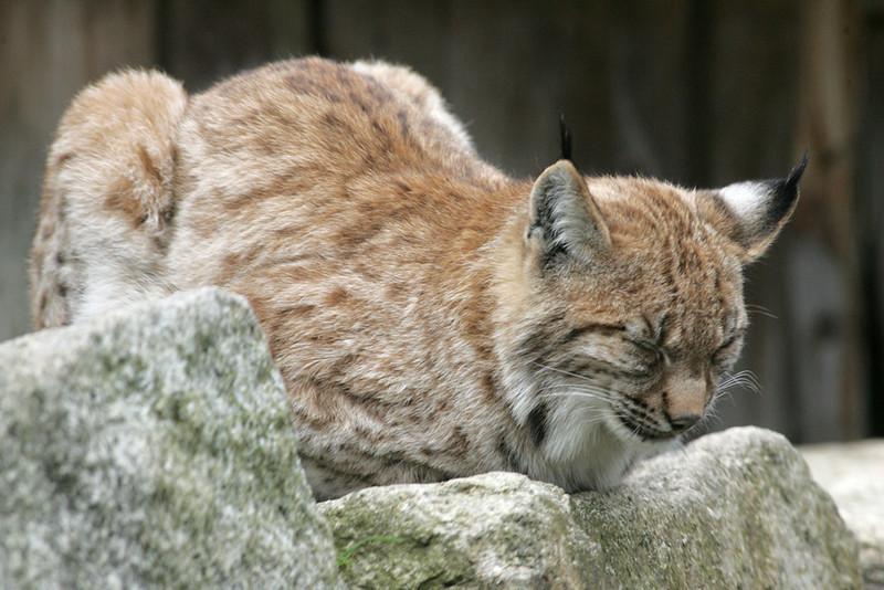 Newquay Zoo 310.jpg