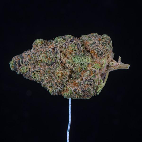Mimosa 4.jpg