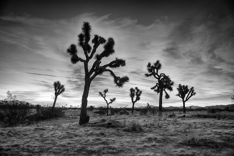 Joshua Tree-0161_HDR-Silver.jpg