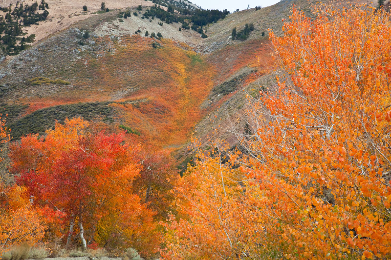 Fall color on the road to North Lake. Bishop Creek Canyon