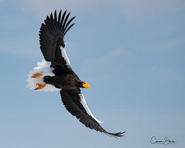 Eagles of Japan - part 1