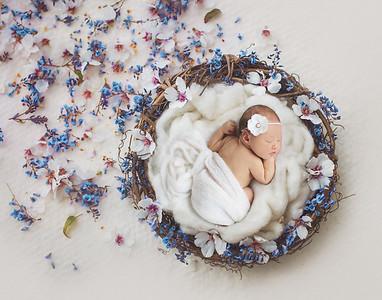 Gemma's Newborn Session