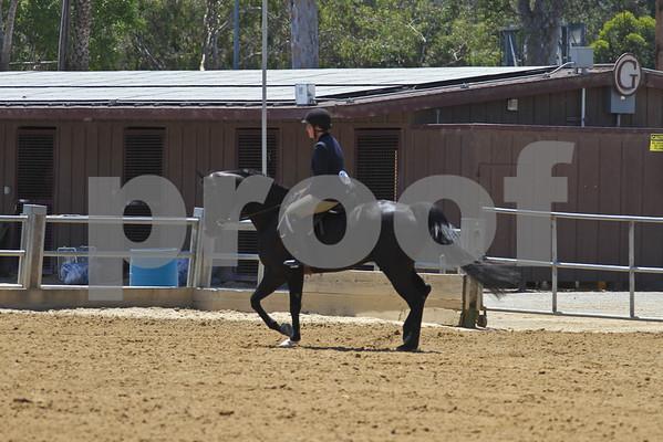 HA AA SH Under Saddle Championship