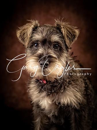 Pets Portraits