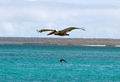Galapagos: Bachas Beach, Santa Cruz Island