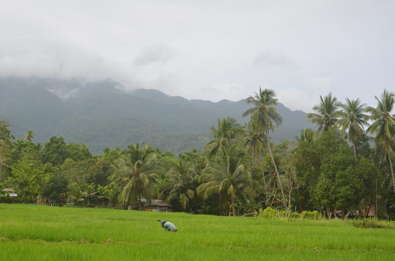 DSC_7488-rice-paddies.JPG