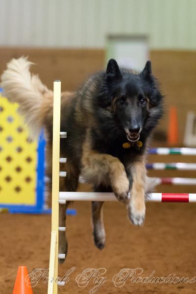 DOG AGILITY ASSOCIATION JUNE TRIALS