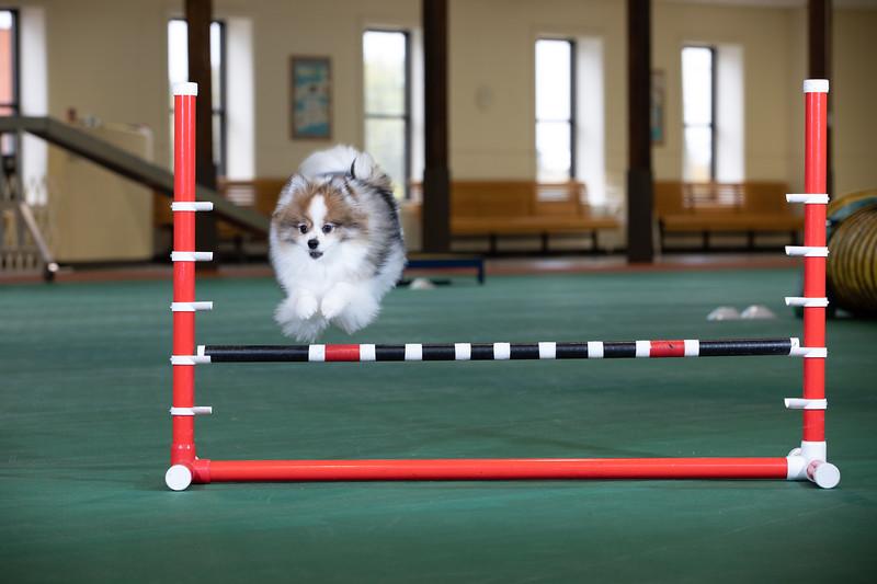 SPCA_Agility-12.jpg