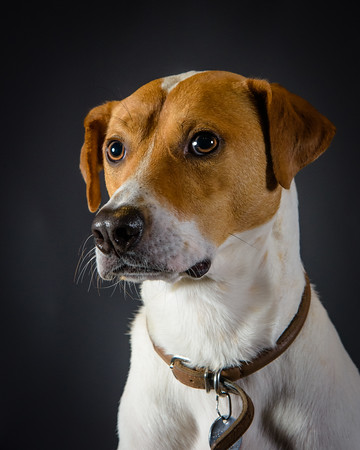 Canine Portrait Packages
