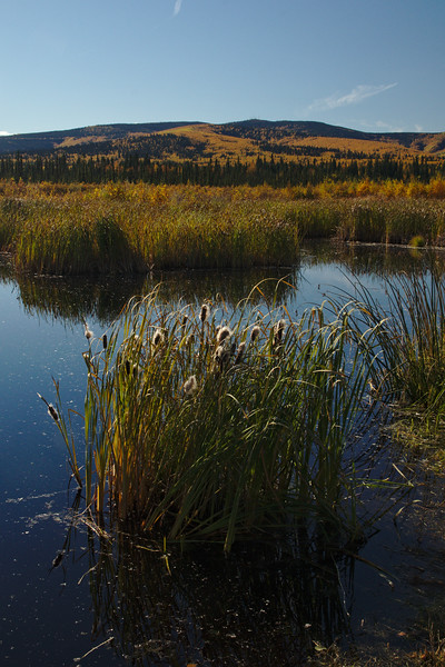 Cattails and Ester Dome