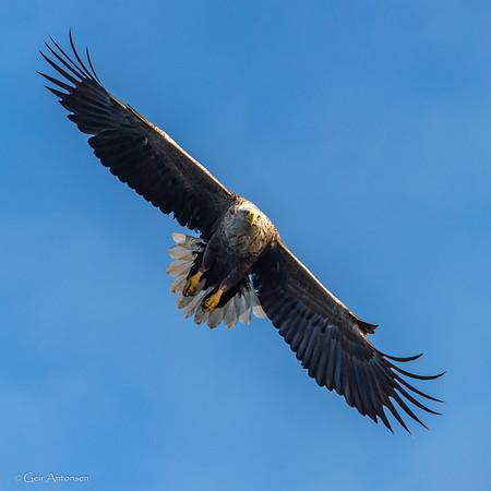 Natur, fugler og dyr / Nature, birds and mammals
