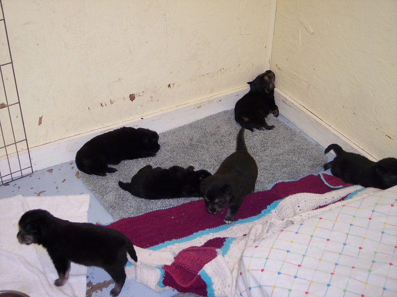 Part of the Ocean's Thirteen litter in our quarantine cage at 1430