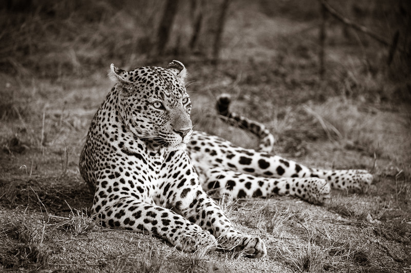 LeopardHills-20191028-1121.jpg