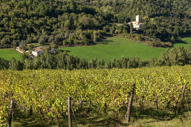 Selvapiana Winery