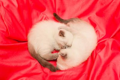 Kittens-11-02-2012