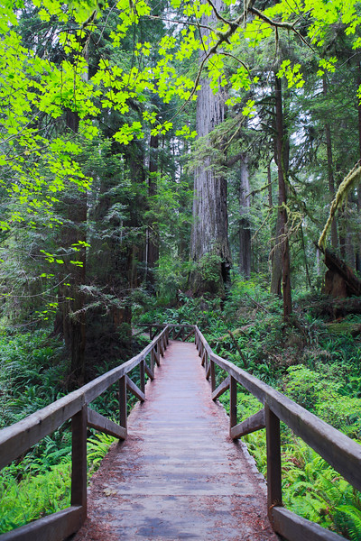 Redwood National and State Parks Northern,Ca