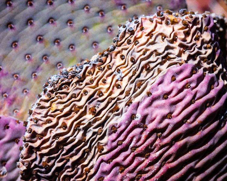 Cactus, Mojave County, Arizona, 2004