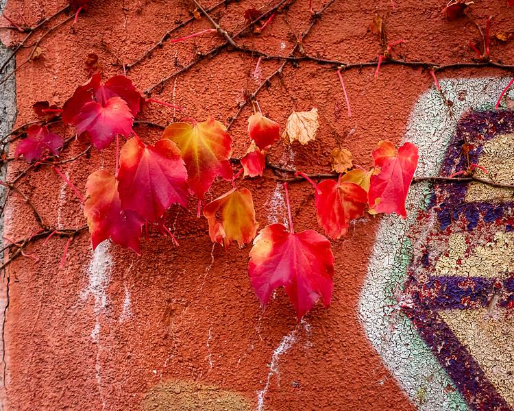 Autumn Leaves on Grafitti