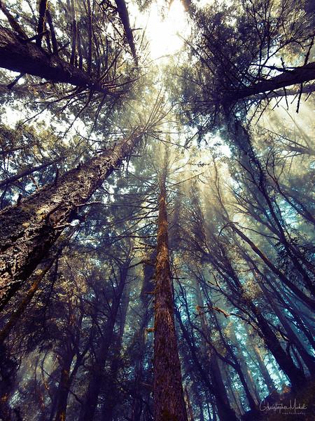 20100710_hiking_8048.jpg