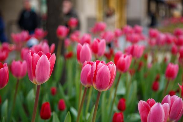 Chicago Spring