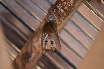 Bats - Fledermäuse