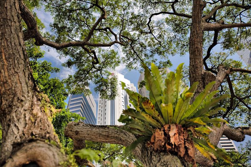 Greenery within Singapore's urban landscape