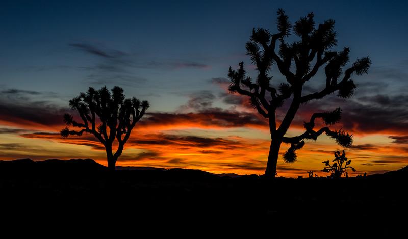 Joshua Tree National Park, California, United States