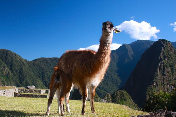 Inca Trail June 2011