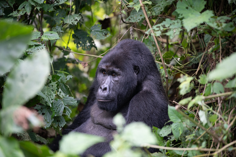 Uganda_T_Gor-1523.jpg