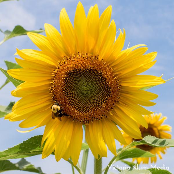 Dix_Park_Sunflower_Trip-2.jpg