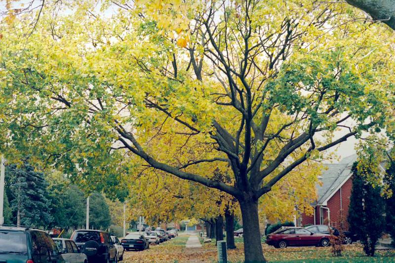 Lester Street, Small Aperture.jpg