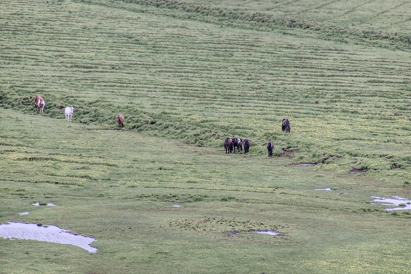 Iceland 3441.jpg