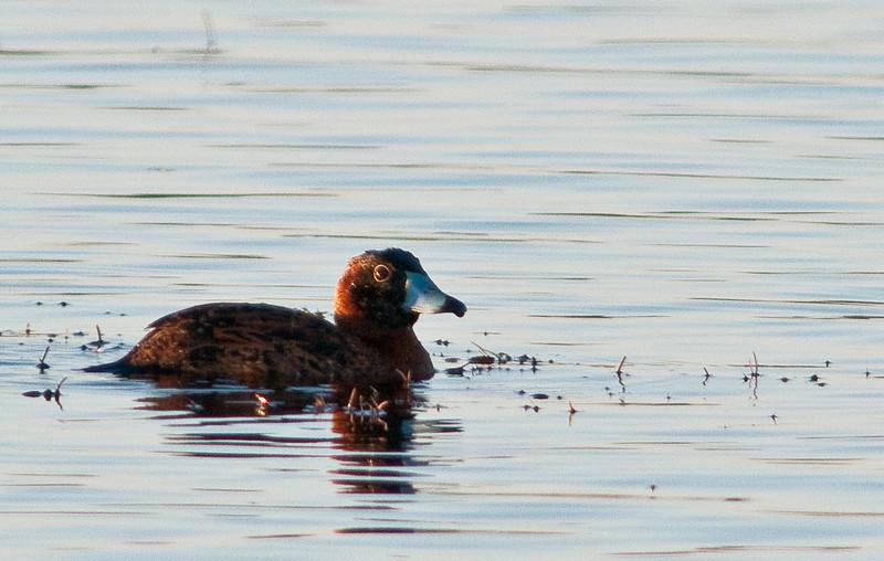 Viera Wetlands 12/30/09 & 1/10/10