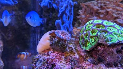 2020-02-24-25 - Reef Tank update - nice coral pics