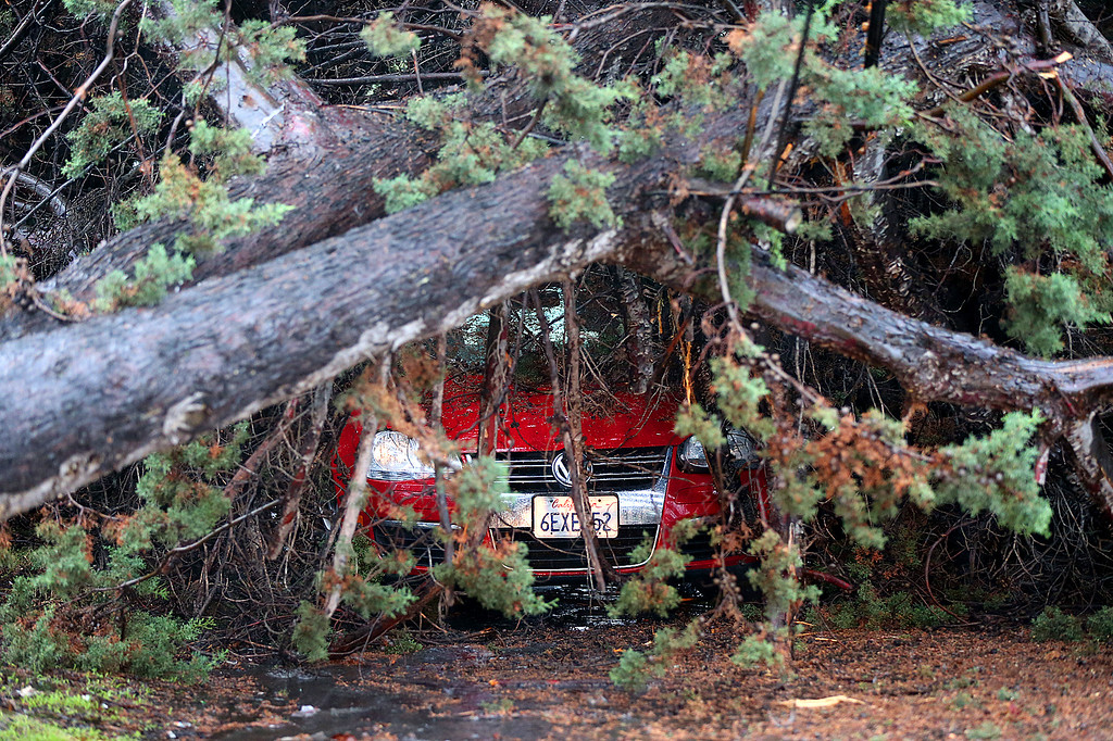 . A car is damaged under a tree along Tanager Avenue on Thursday, Dec. 11, 2014, in San Leandro, Calif.   (Aric Crabb/Bay Area News Group)