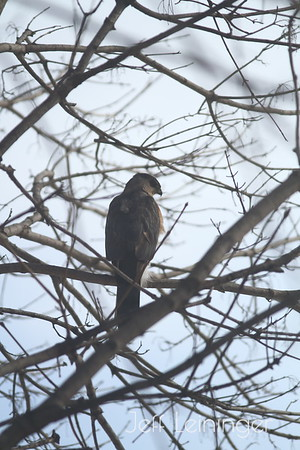 Visitor in our tree.