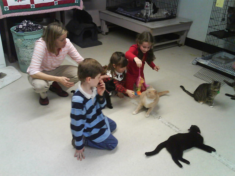 Visitors playing with the adult cats in the back cat room at 1430