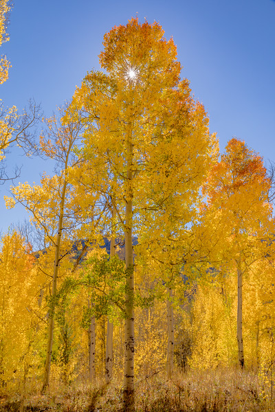 Aspen Glow at Steamboat Springs