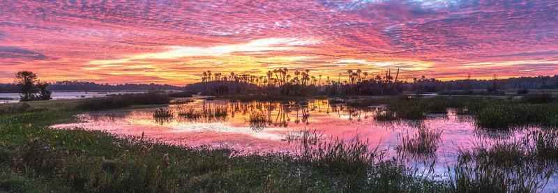 Orlando Wetlands Sunrise Panorama