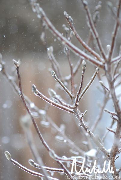Snow1-29-10-002.jpg