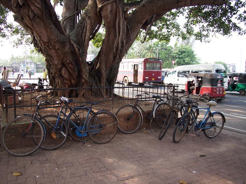 P2178651-bicycles.JPG