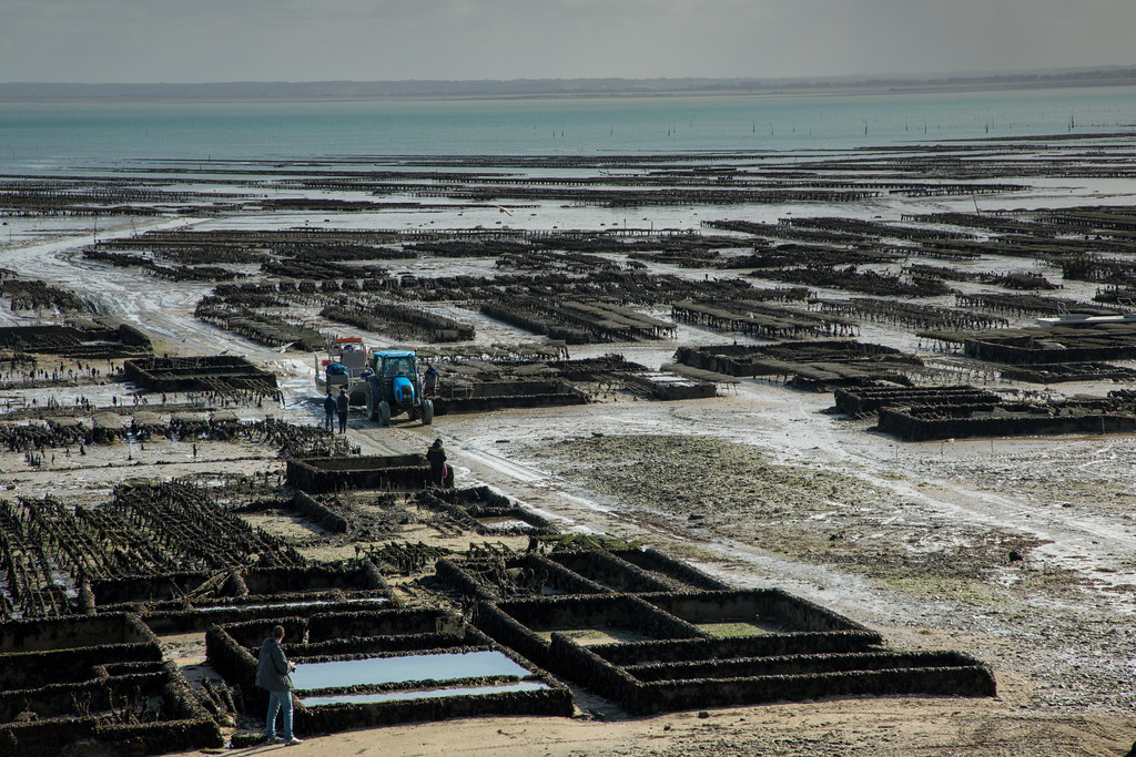The Oyster Beds of Cancale, France