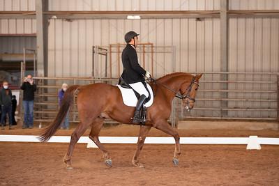 Horse 157