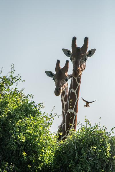 Samburu (63 of 70).jpg