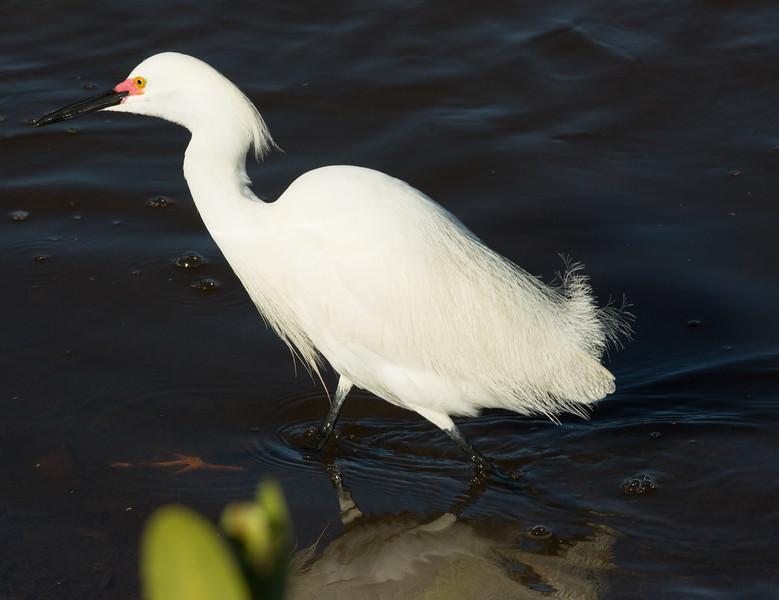 19-Sept North America Birds-8758.JPG