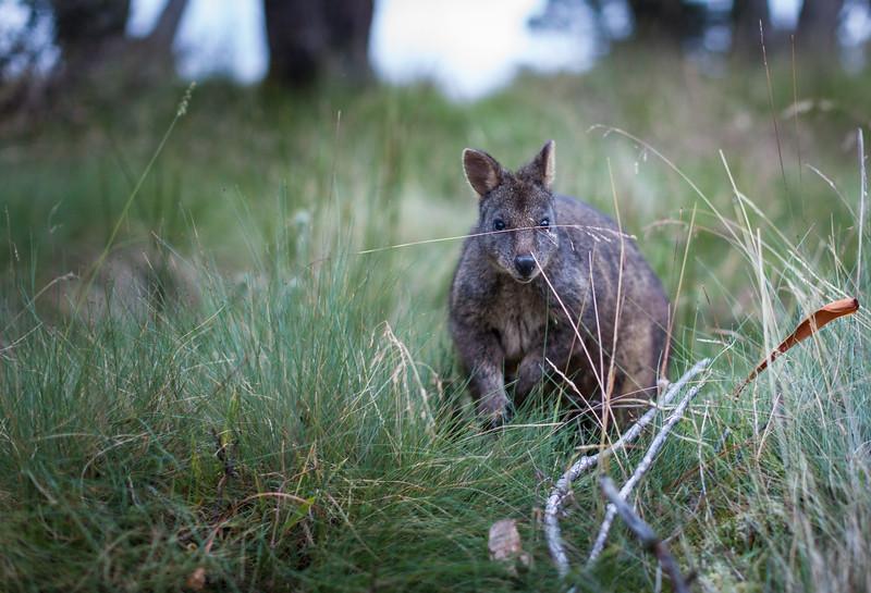 Tasmania_2015_211.jpg
