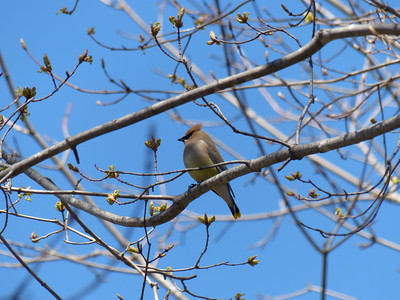 20160427 Migrating Birds