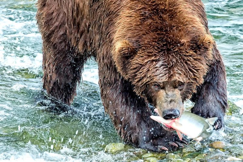 Alaska_2013_FH0T7724.jpg