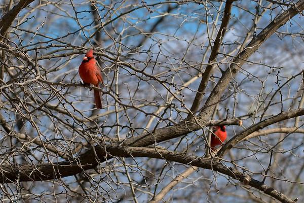 Cardinals 01Dec08