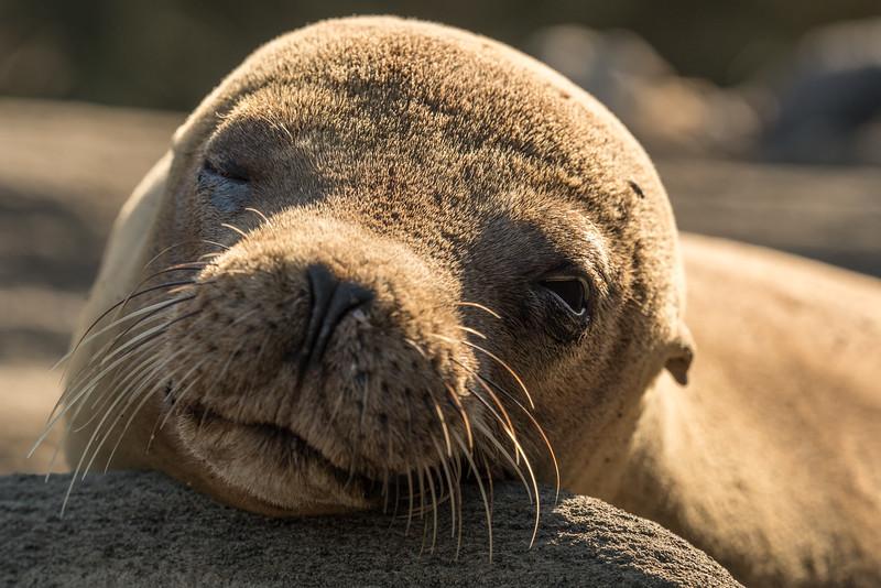 Galapagos-Best-078.jpg